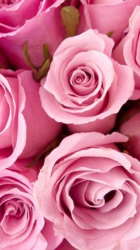 Samsung Galaxy E7 Wallpapers Rose Bunch Android Wallpapers