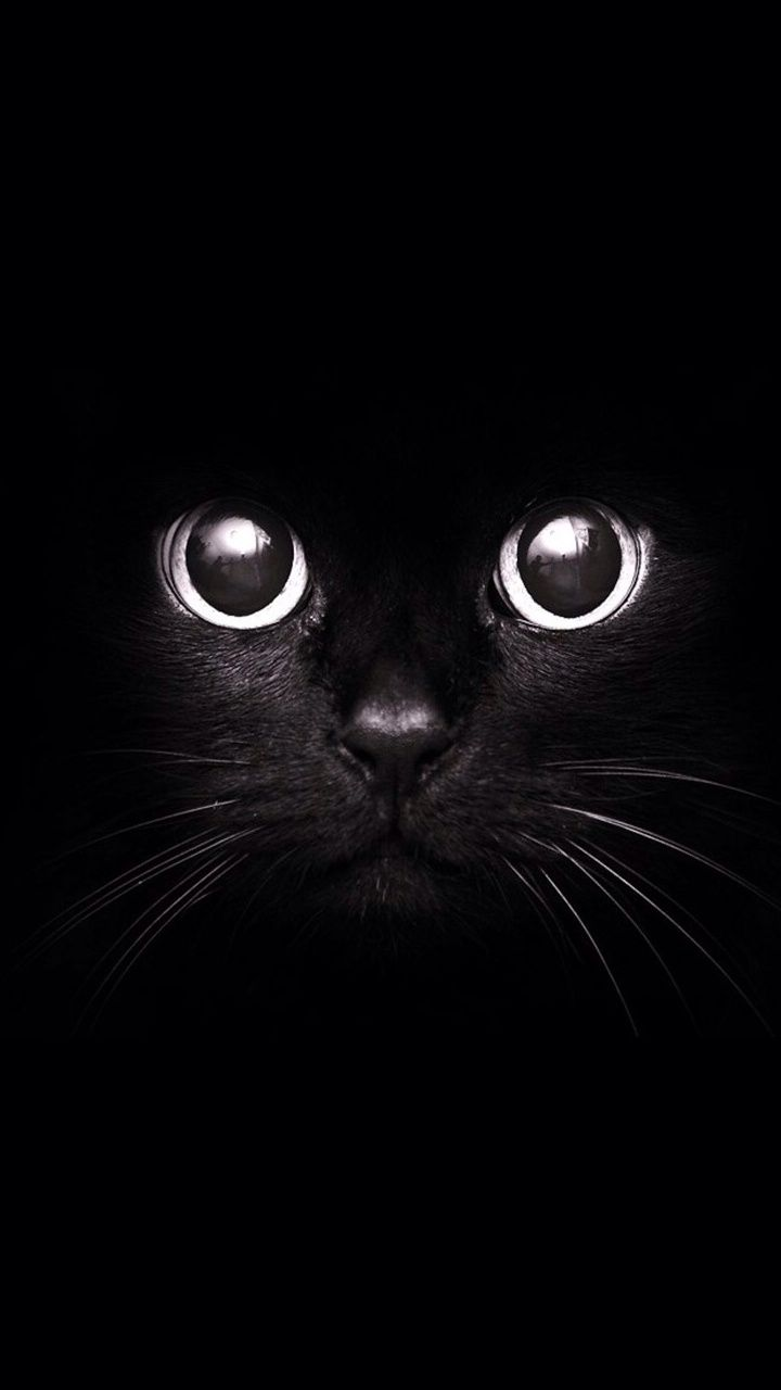 Samsung Galaxy J3 Wallpapers Black Cat Android Wallpapers